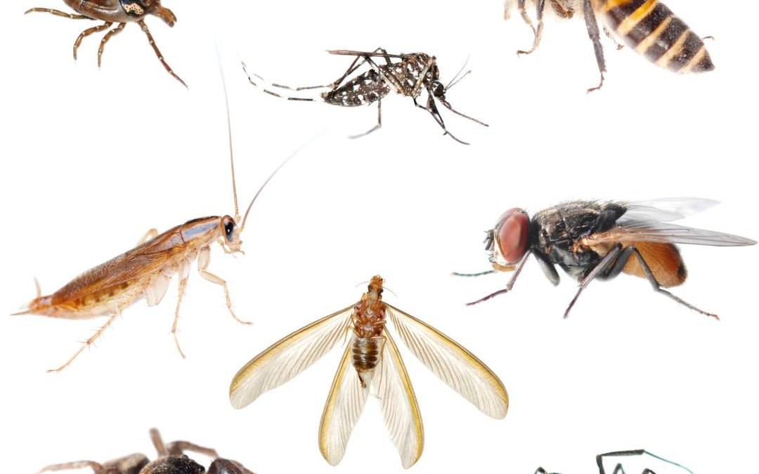 How to Identify Indoor Insects